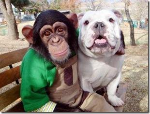 chimp & dog